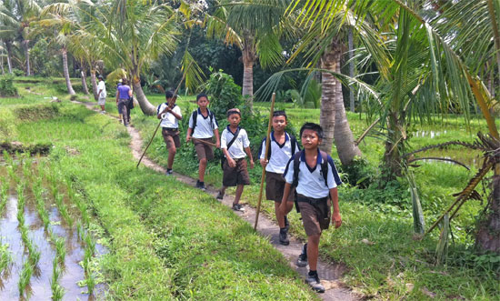 Bali: Where children walk through verdant fields to attend tout school.