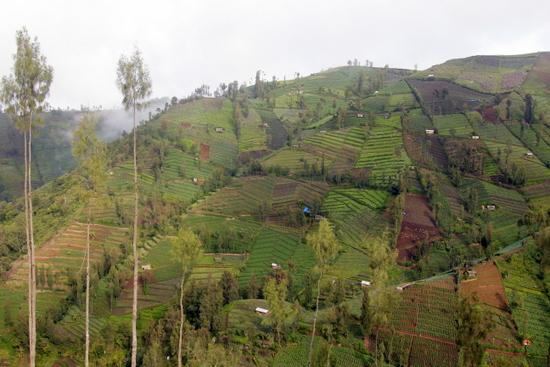 Farming the incredibly steep slopes around Gunung Bromo