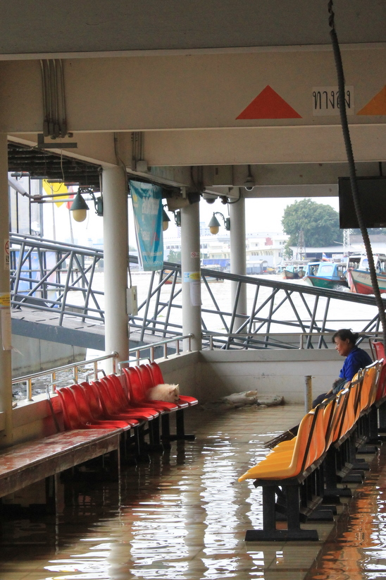 Woman waits for a Chao Phraya Ferry in a flooded waiting room.