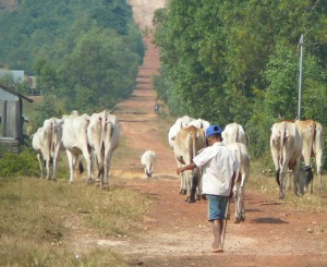 Traffic jam in rural Sihanoukville