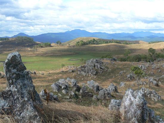 Veal Thom grasslands.