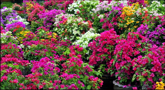 Myriad varieties of each plant