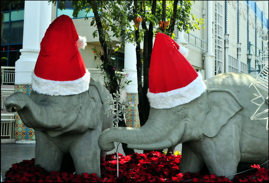 to a shortage of reindeer in Chiang Mai the local Santa employs elephants instead