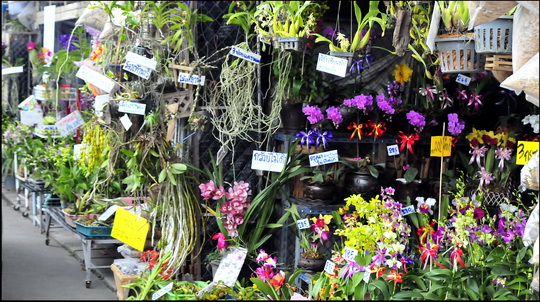 One of the market's numerous orchid stalls