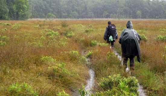 Trekking in the Cardamoms: just a stroll in the rain.