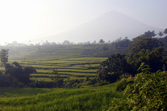 Typical Java -- lush ricefields and towering volcanoes
