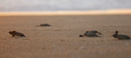 Just you, the turtles and a couple of conservation park workers at Ujung Genteng