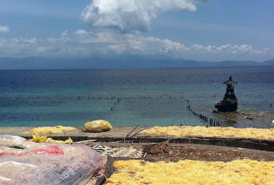 Looking toward Bali's Gunung Agung from seaweed-rich Nusa Penida.