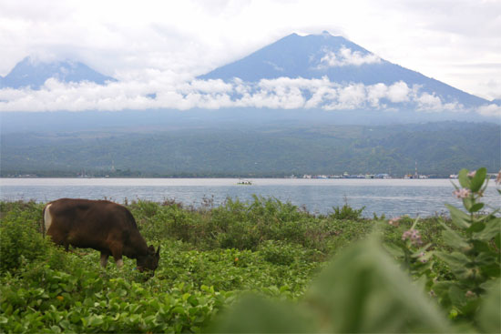 A cow and a couple of volcanoes. Meet Gilimanuk.