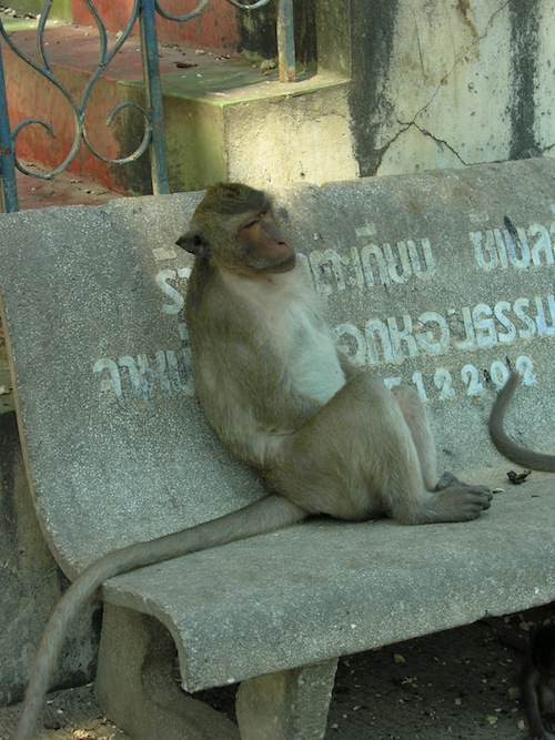 Thailand's animals seem ultra laid back too; something in the water?