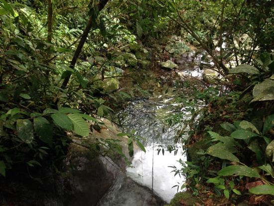 The jungle shower -- frosty.
