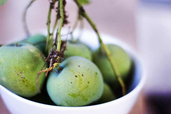 Green mangoes, in my kitchen ready for the julienne