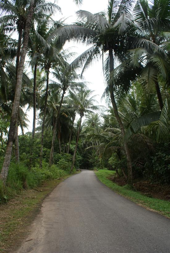Take a hike or rent rent a bike to explore Ubin's jungle trails.