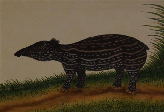 Tapirs are cute when they're little, but wait til it's 300kg. 
