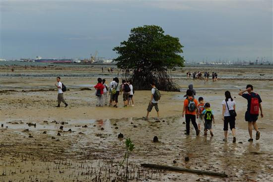 A guided tour of Pulau Semakau's inter-tidal area. 
