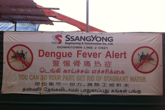 Despite the government's best efforts, Singapore is not mosquito free.