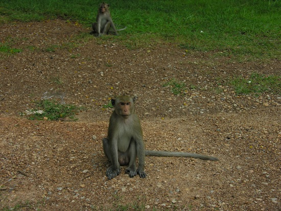 The campground's been overrun by monkeys!