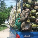 Getting into a little monkey business will see you carted off to jail.