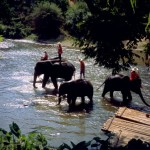 Elephants and mahouts near Chiang Mai