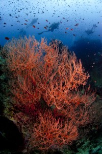 Chumphon Pinnacle