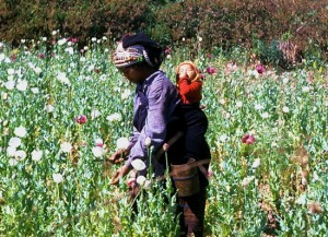 Akha hill-tribe woman with opium poppies