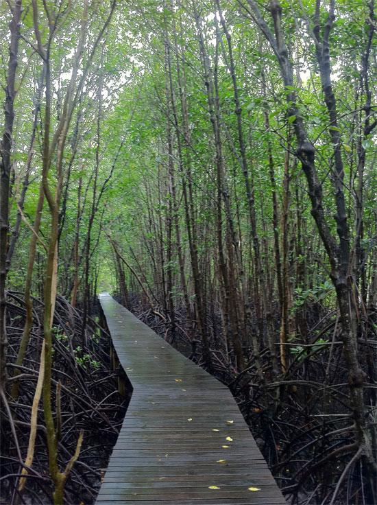 Wander the mangroves.