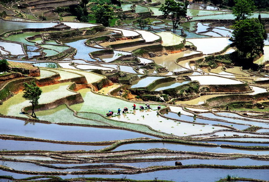Rice terraces, Yunnan