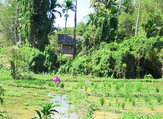 You'll find rural scenes like this at both islands. This is Yao Noi.