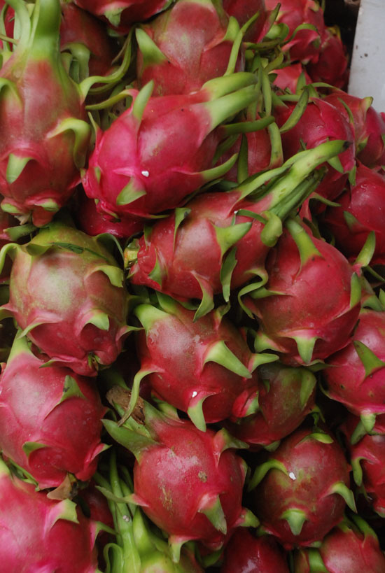 Detail shot: a classic dragon fruit close-up to finish.