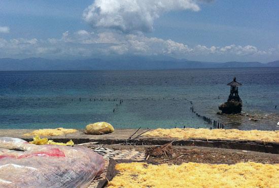 Looking toward Bali's Gunung Agung from seaweed-rich Nusa Penida.